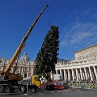 Árvore de Natal chega à Praça São Pedro para ornamentação